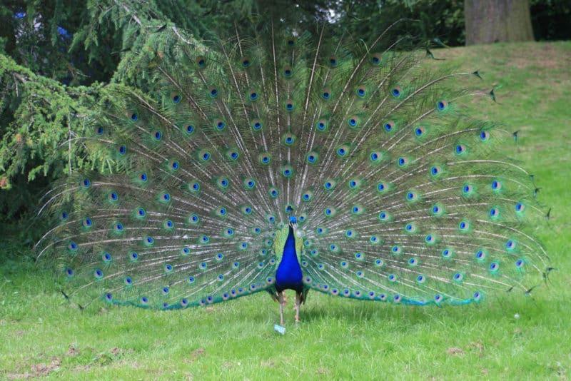 Beautiful plumage!